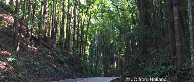 Mahogany Forest Bohol