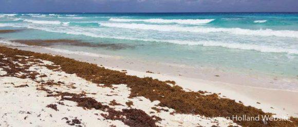 zeewier, cancun,riviera Maya, Quintana Roo, Yucatan, problemen, playa del Carmen, strand, vakantie