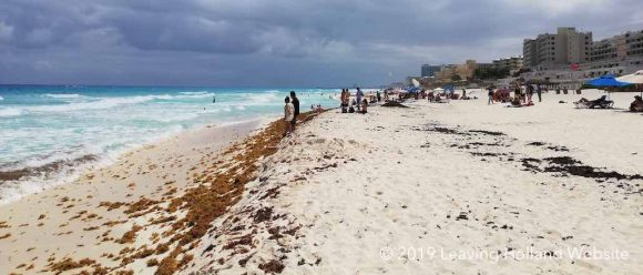 Seaweed problem in Cancún in 2019 | Leaving Holland