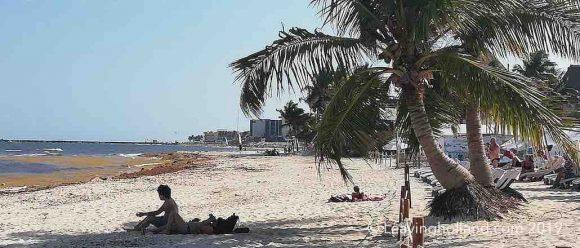 zeewier, playa del carmen, cancun, yucatan, mexico, 2019