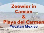 zeewier in Yucatan, Playa del carmen, Tulum, Cancun, update 2019
