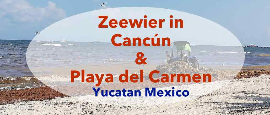 zeewier in Yucatan, Playa del carmen, Tulum, Cancun, update 2019