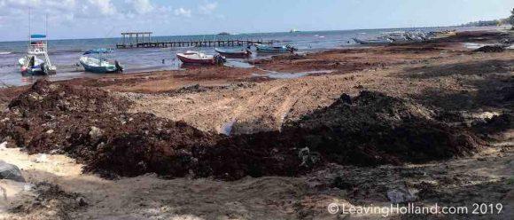 zeewier, strand, playa del carmen, cancun, yucatan, mexico, reizen, tui, 2019