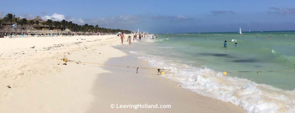 Seaweed in Playa del carmen 2020